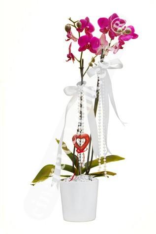 Çiftli Pembe Natürel Orkide C-OR157