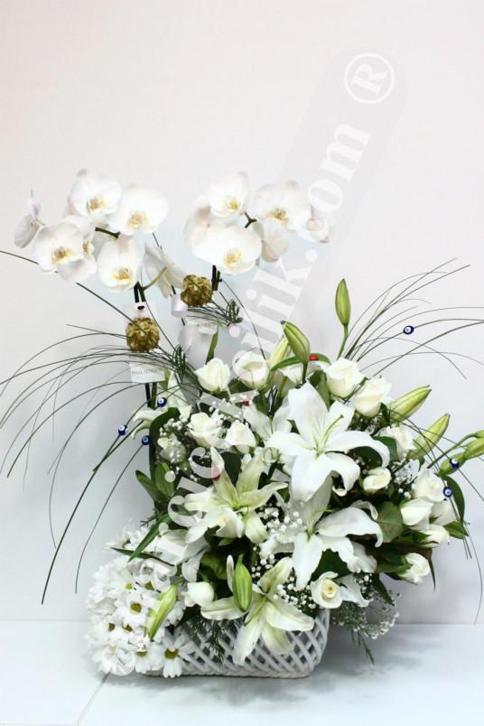 İki Köklü Beyaz Orkide Çiçeği C-OR134