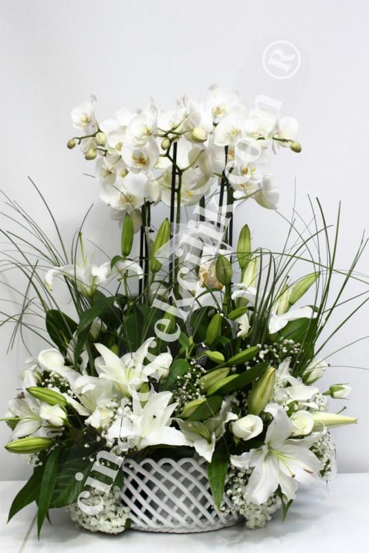 Altı Köklü Beyaz Orkide C-OR136