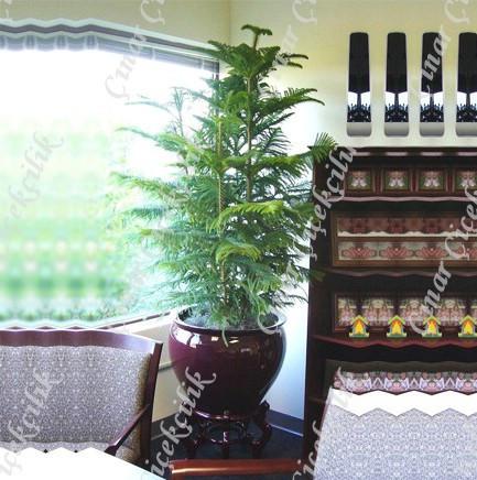 Araucaria Norfolk 3lü Salon Camı C-SAK191