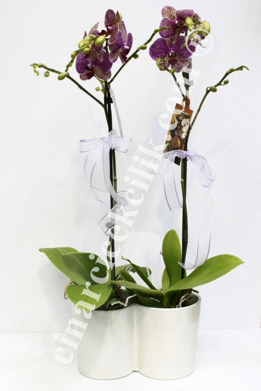 Seramik Vazo İkili Kırçıllı Orkide C-OR127