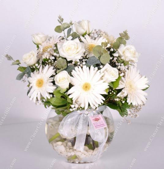 Mutluluk Seli Beyaz Gül Gerbera C-AR140