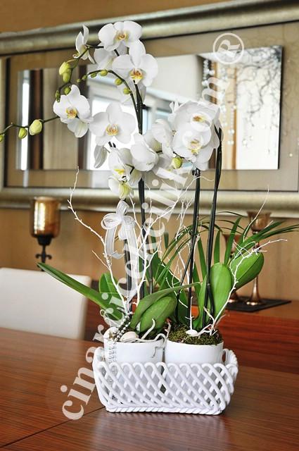 Dörtlü Beyaz Orkide Çiçeği C-OR147