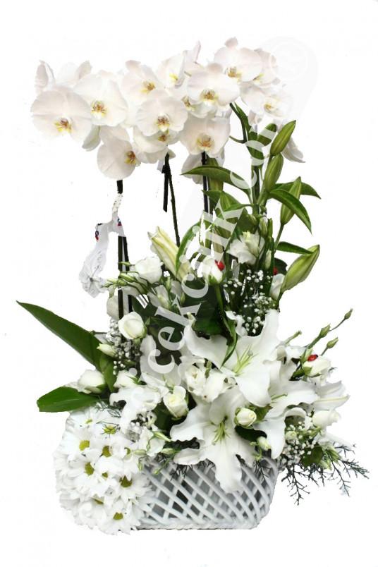 Dört Köklü Beyaz Orkide C-OR133