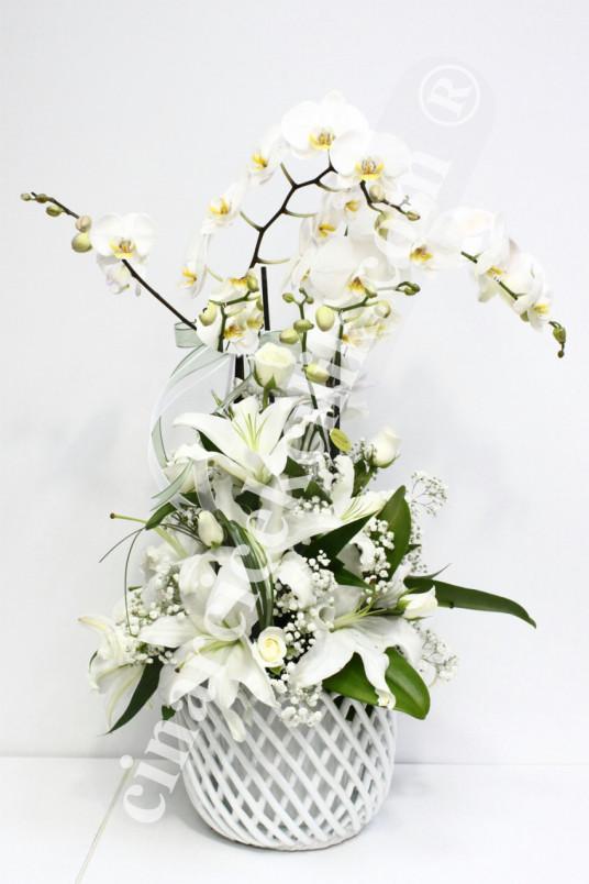 iki Köklü Beyaz Orkide Beyaz Lilyum C-OR137