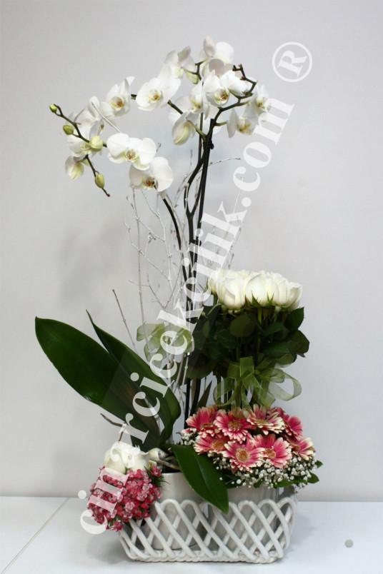 İki Kök Beyaz Orkide Çiçeği Beyaz Gül C-OR138