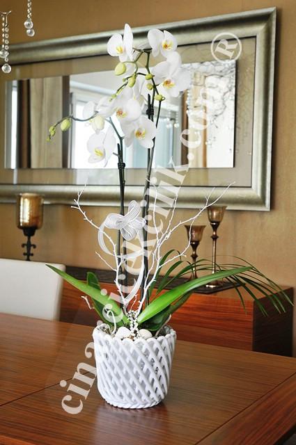 İkili Beyaz Orkide Çiçeği C-OR146