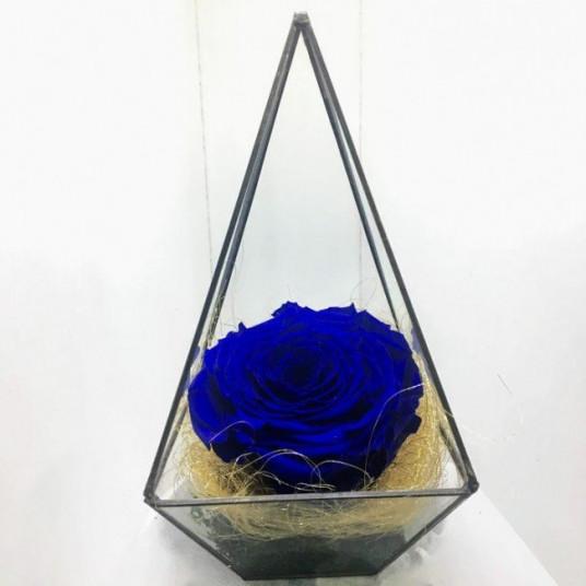 Piramit içinde mavi Solmayan Gül