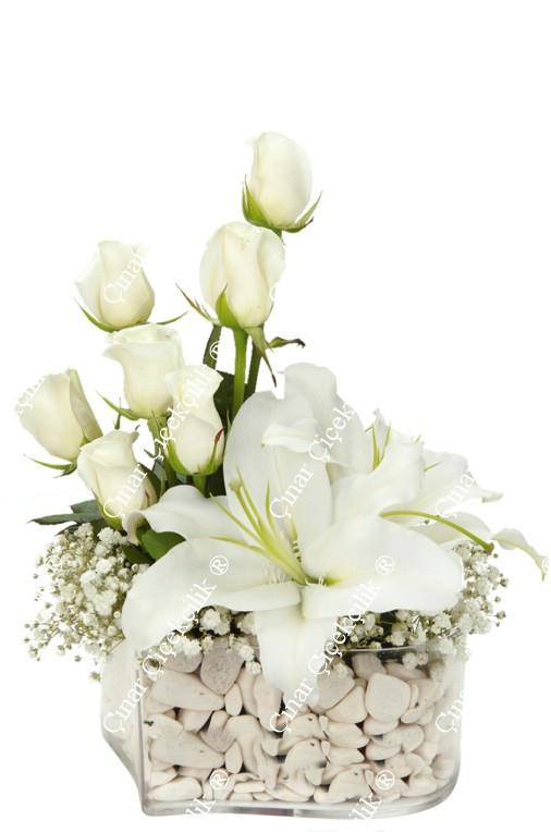 Sonsuza Kadar Beyaz Gül Lilyum C-CAM128