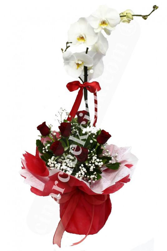 Kırmızı Gül Tekli Orkide  C-OR131