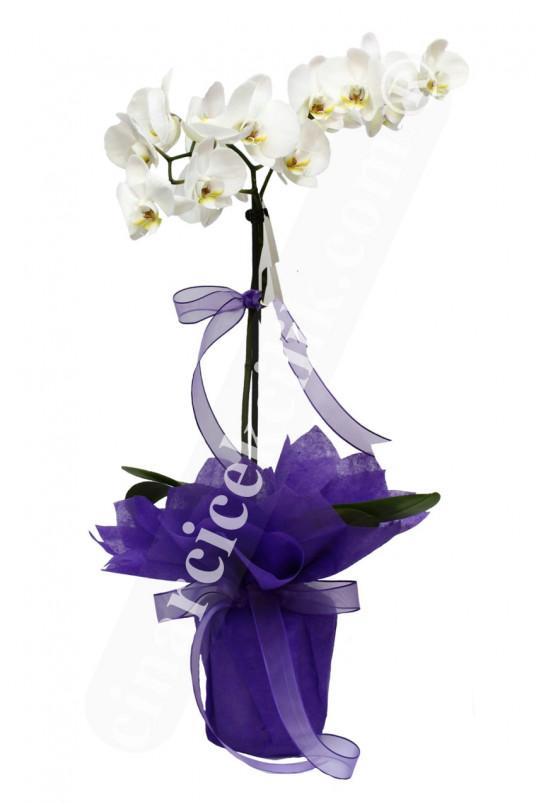 Tekli Beyaz Orkide C-OR120