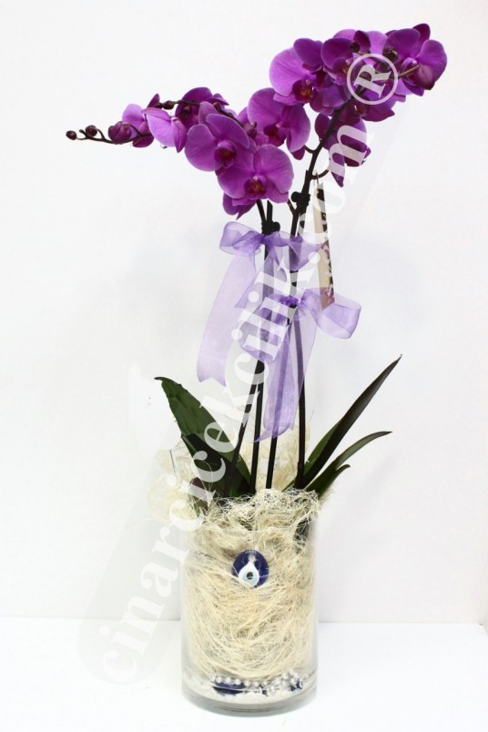 Nazar Boncuğum İkili Pembe Orkide C-OR142