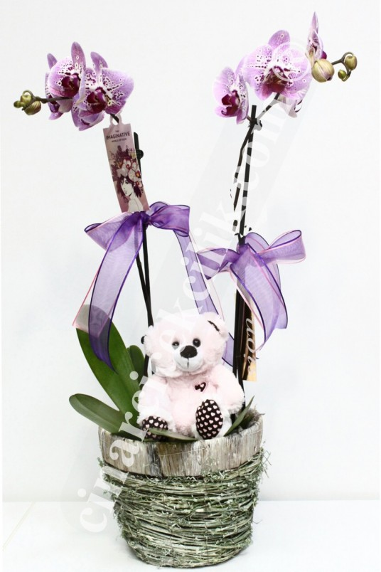 Oyuncaklı Pembe Orkide Aranjmanı C-OR140
