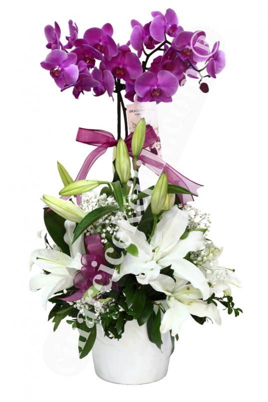 İkili Pembe Orkide C-OR135