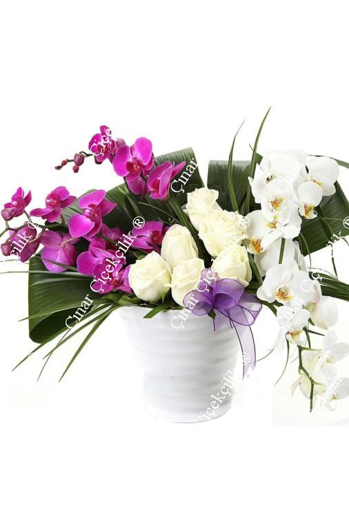 Güzel Aşk Beyaz Pembe Orkide Gül