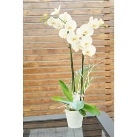 İkili Beyaz Orkide C-OR149