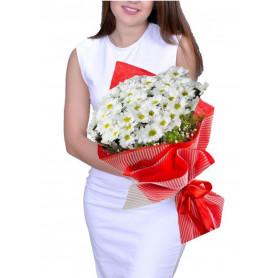 En Güzeli Papatya Kır Çiçeği