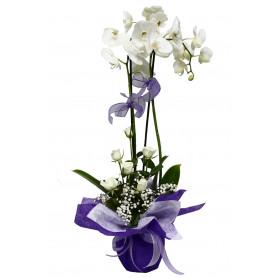 İkili Beyaz Orkide Beyaz Gül C-OR130