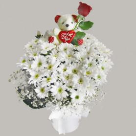 Oyuncaklı Ayı Kır Çiçekleri