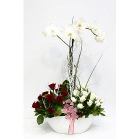 Beyaz Gül, Orkide Kırmızı Gül C-OR129
