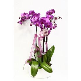 Pembe Dört Köklü Orkide C-OR124