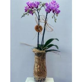 Özel Cam Vazoda Mini Orkide