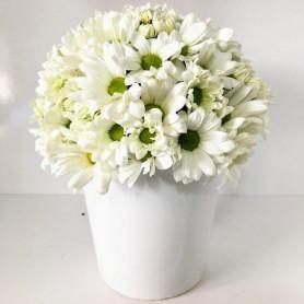 Kraliçem Kir Çiçekleri C-AR146