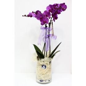 Nazar Boncuğum İkili Pembe Orkide