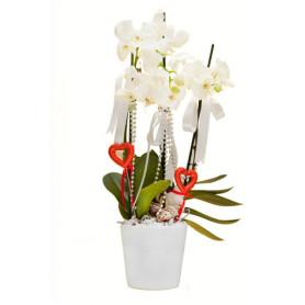 Üç Dal Beyaz Seramikte Beyaz Orkide C-OR108