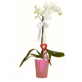 Beyaz Orkide Çift Dal Pembe Vazo C-OR106