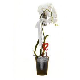 Beyaz Mix Orkide Tek Dal C-OR104
