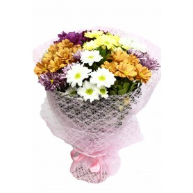 Bahar Sevinci Papatya Kır Çiçeği