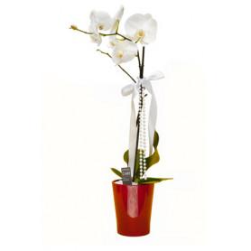 Beyaz Orkide Siparişi, Gönder Tek Dal